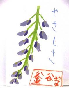 絵手紙 藤の花